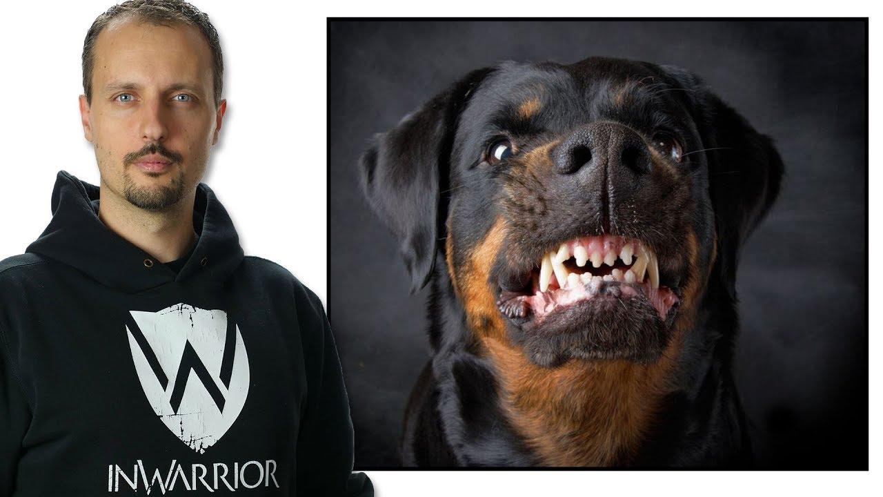 come difendersi da un cane - Difesa Personale